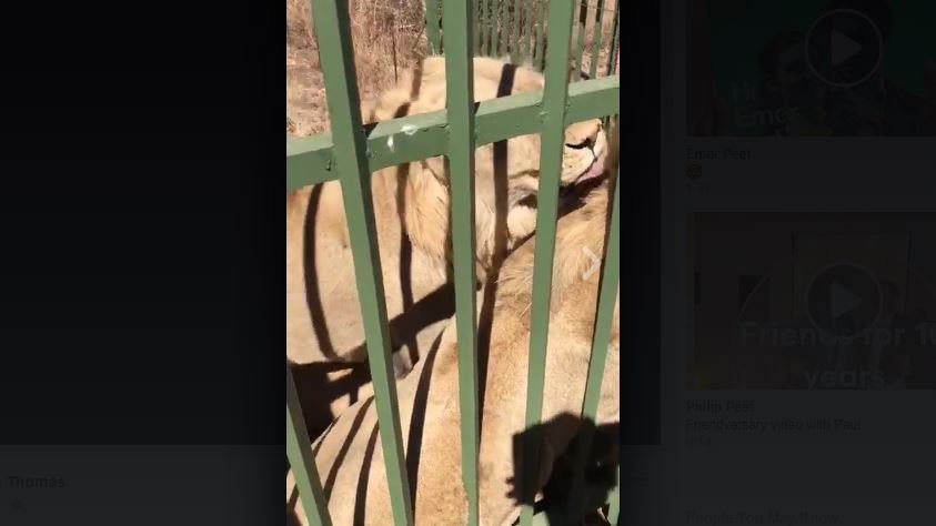 WATCH: The video of Scott Baldwin getting his hand mauled by a Lion