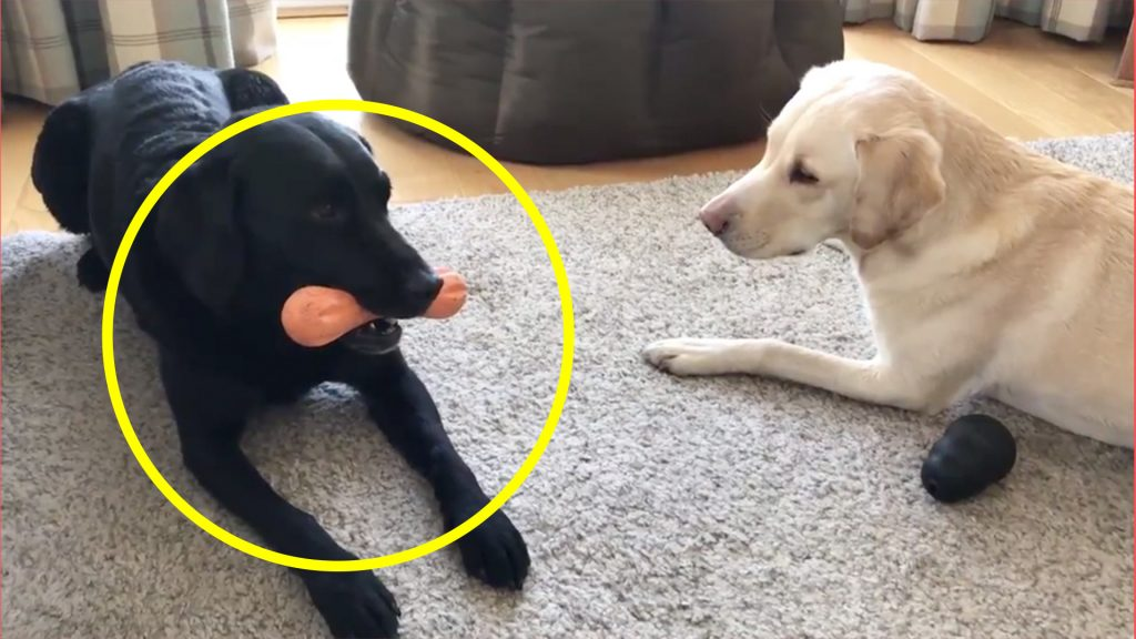 A rugby commentator has gained 9 millions views by just filming his dogs