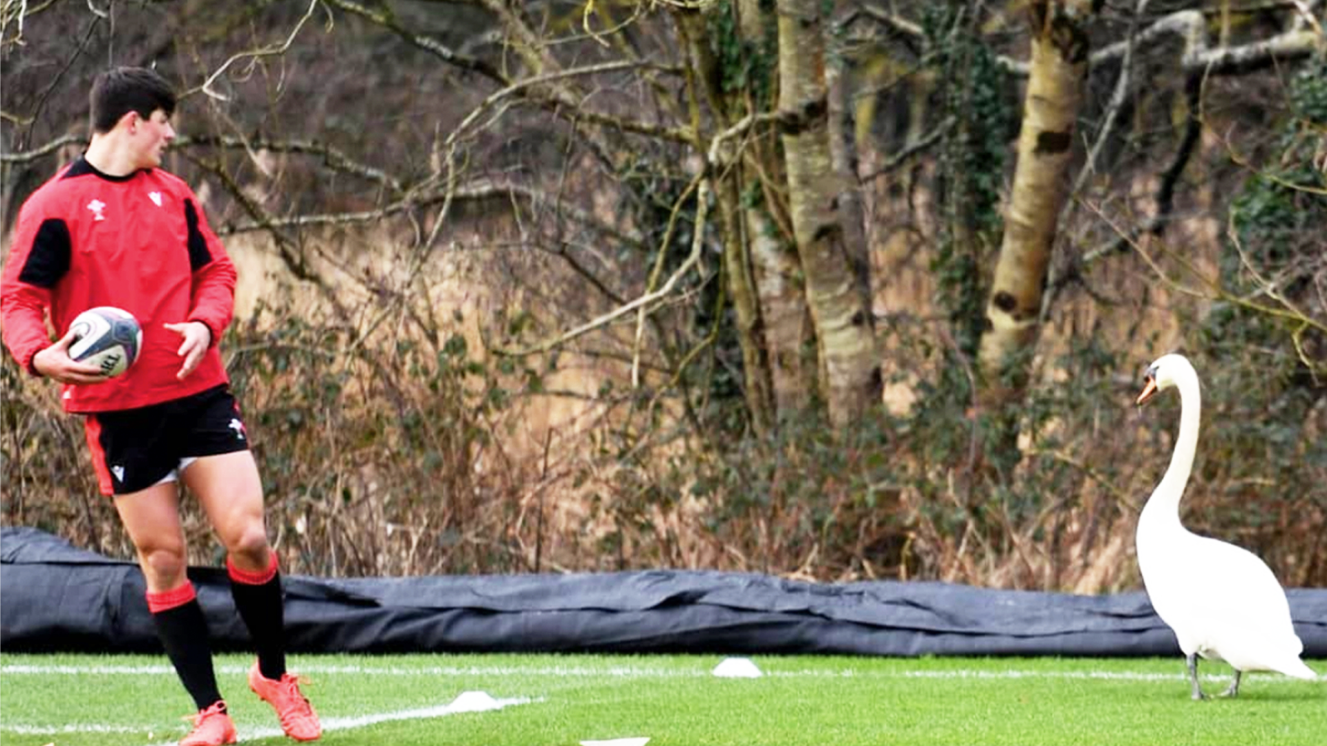 Investigation opened into England Rugby after bizarre training ground incident in Wales